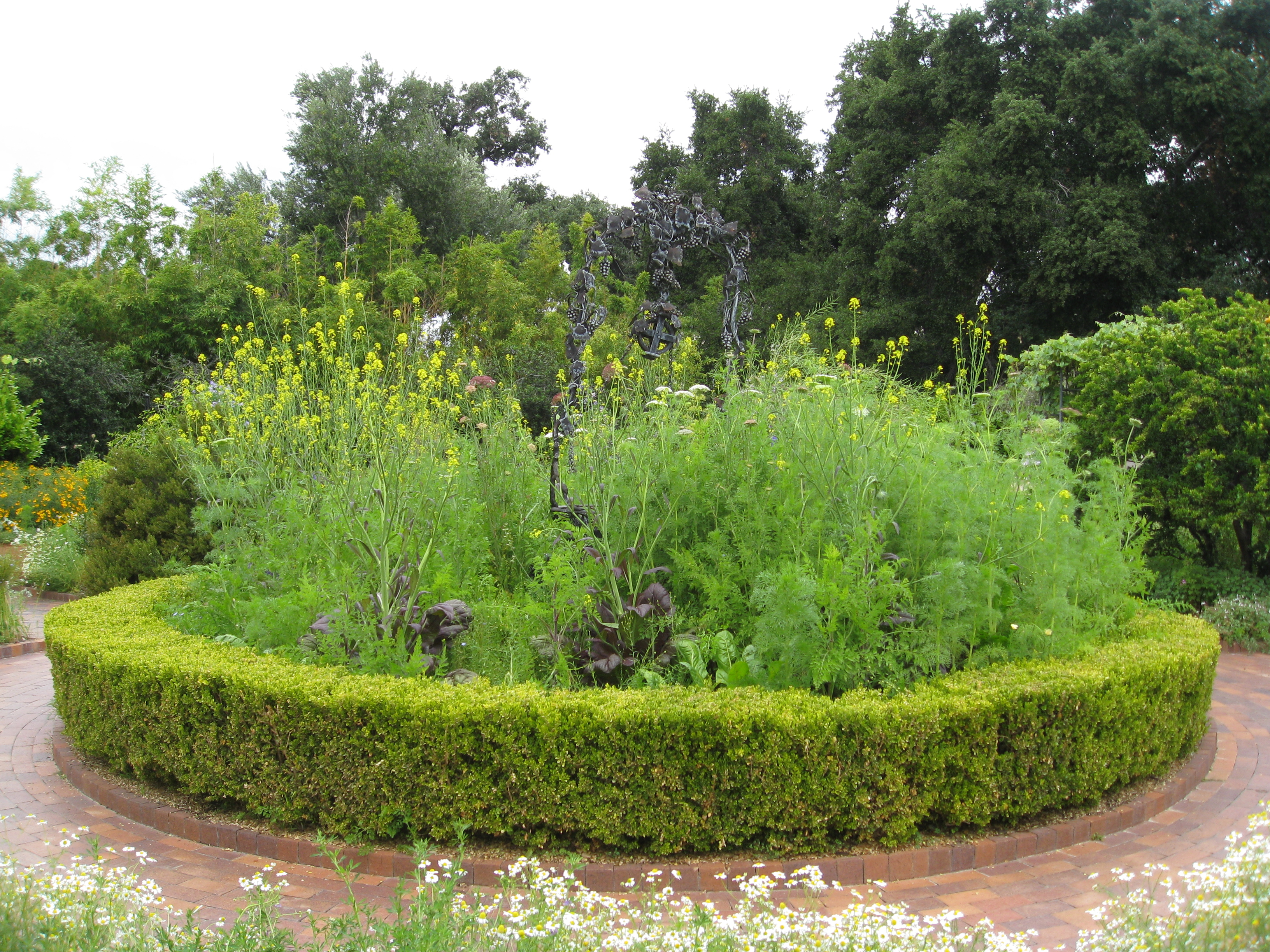 Mustard greens and Queen Anne's Lace reach for the sky.
