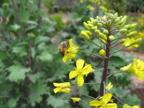 Read more about the article Review: Natural Beekeeping Conference 2016
