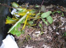 Food scraps in a worm bin