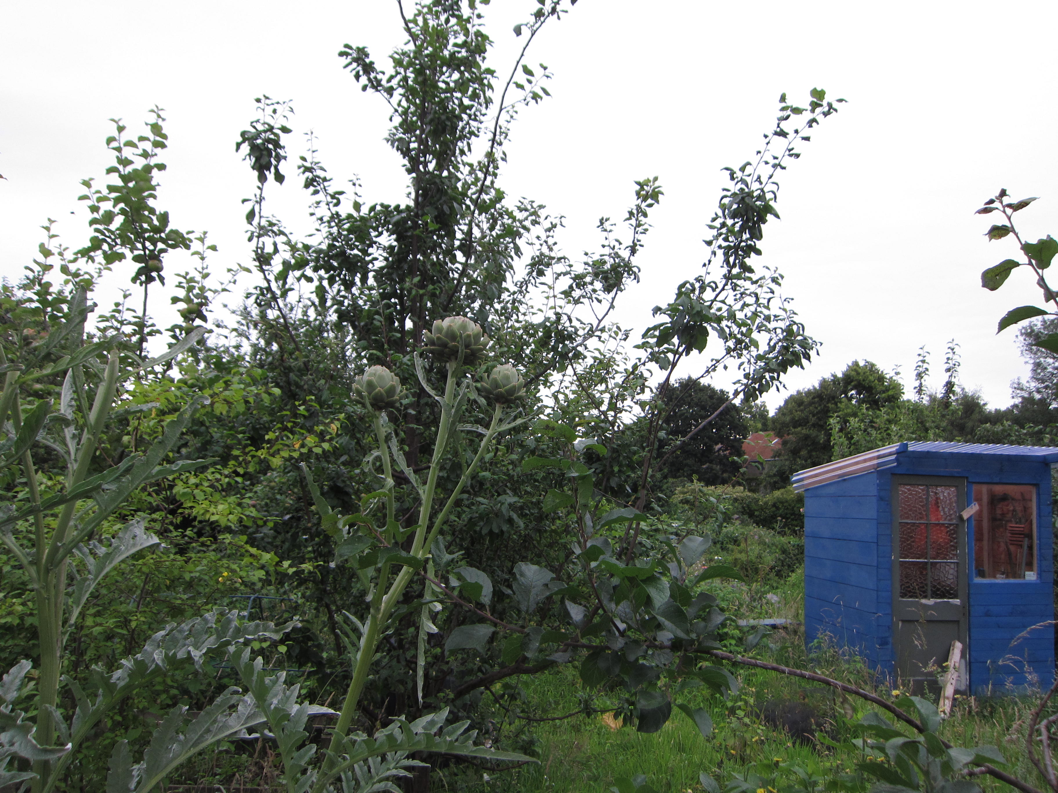 Large allotments had plenty of room for charming storage sheds and artichokes.