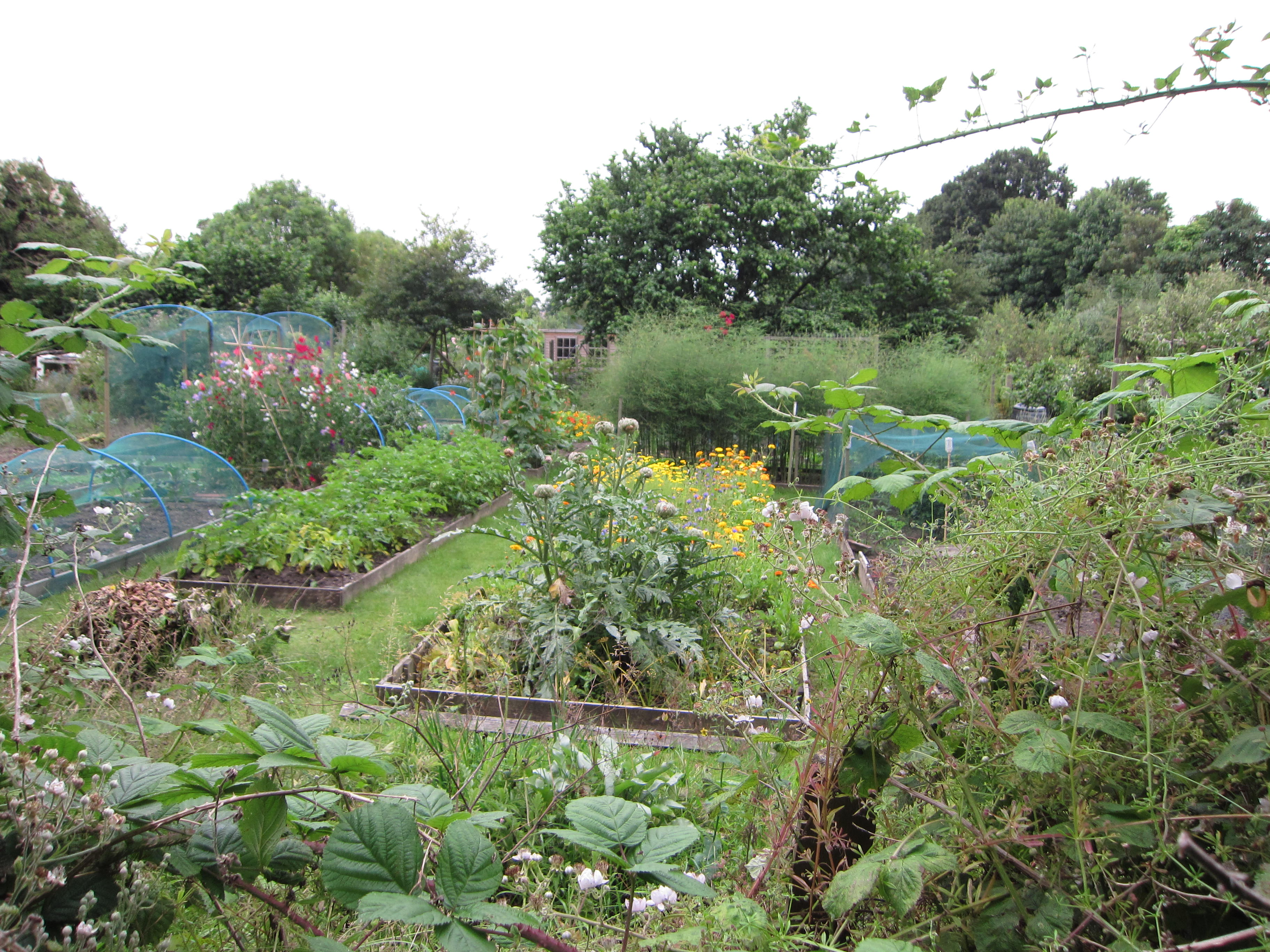 Large plots with raised beds (or not), filled with berries, potatoes, marigolds and more.