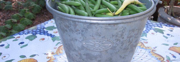 Green bean overload. We filled a 1 gallon bucket from our 4 square foot patch of bush beans when we got home.