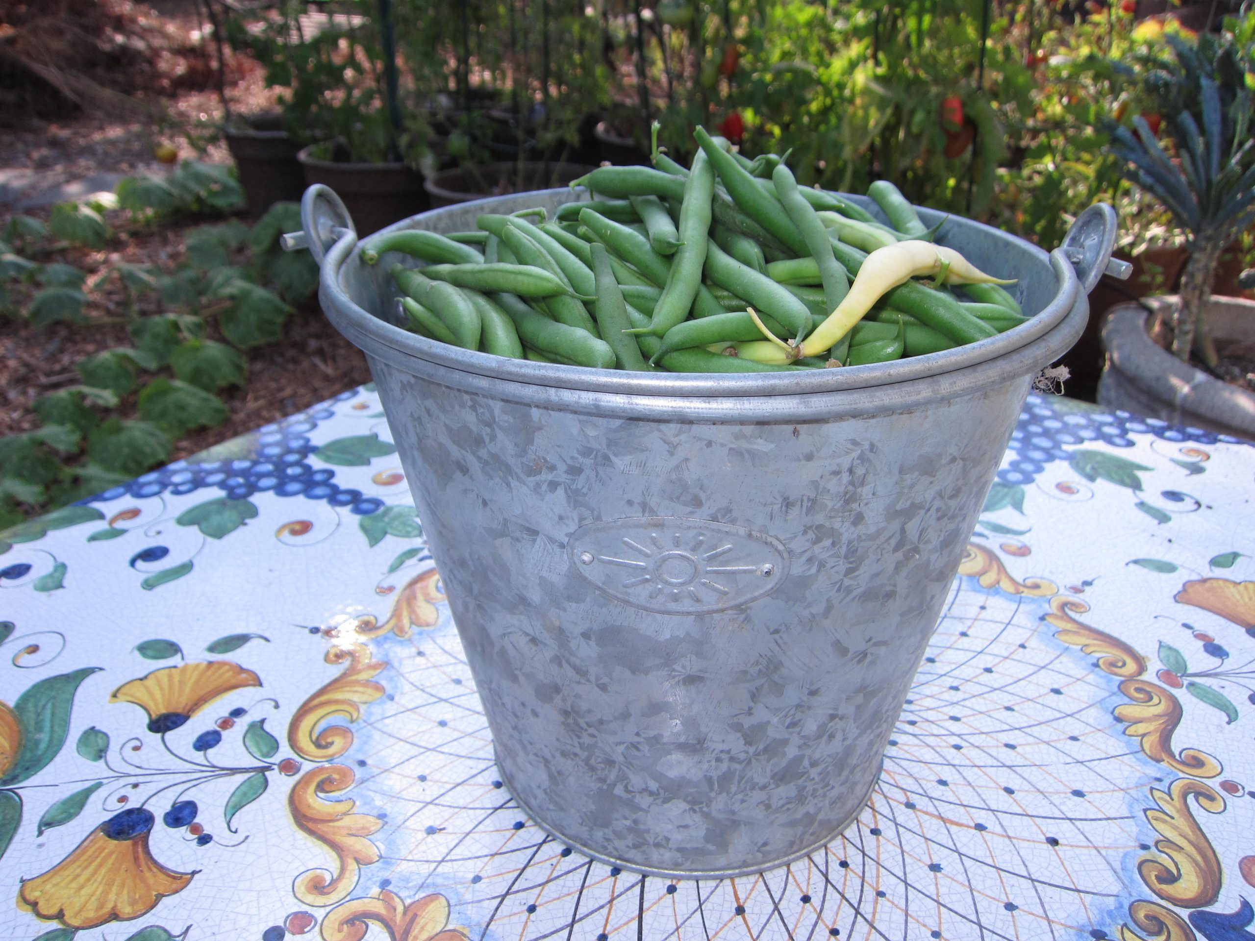 Read more about the article What to do with Overgrown Green Beans