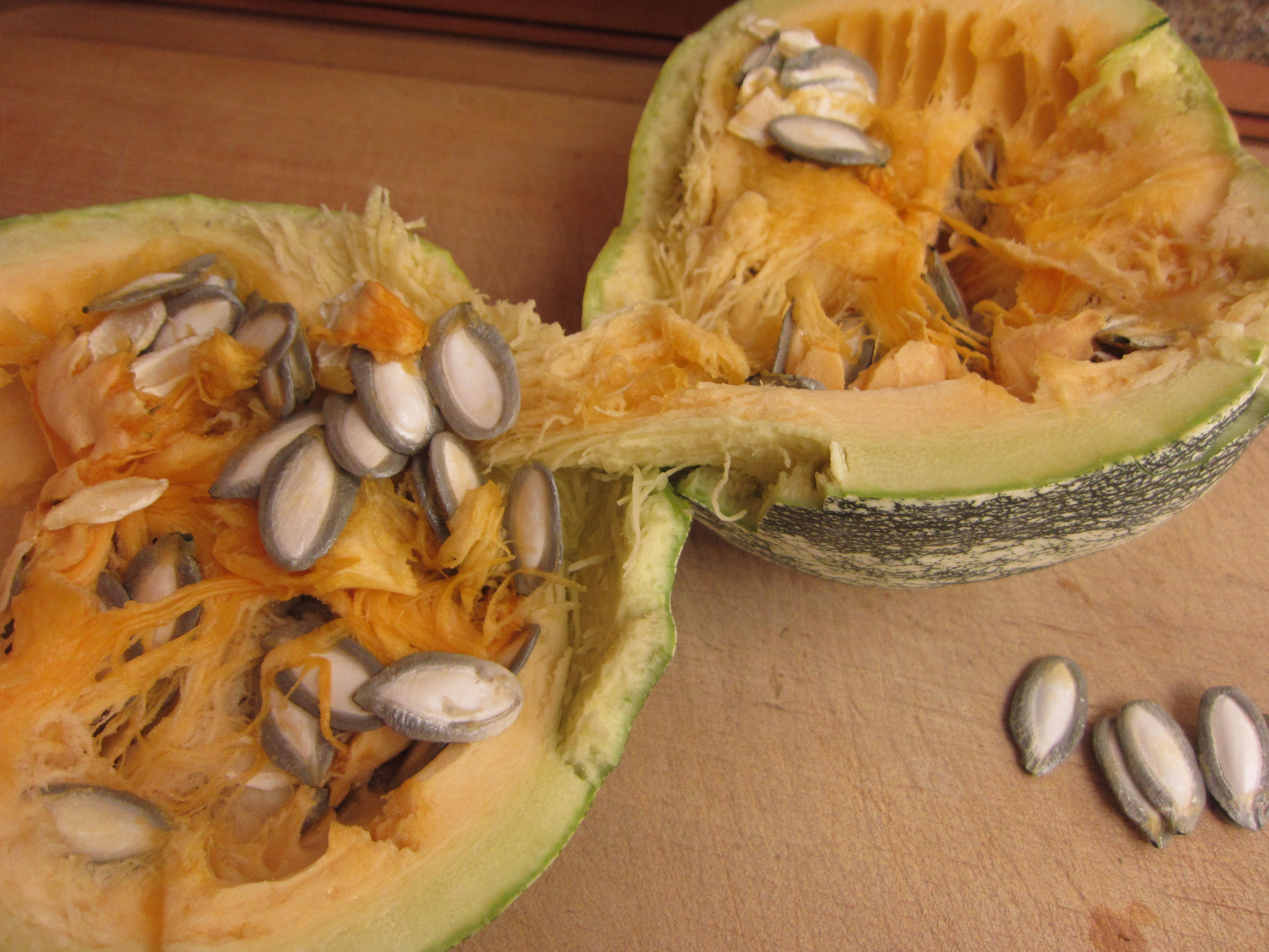Glorious Silver Edge pumpkin seeds, literally in the flesh.