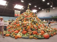 The squash tower reigns supreme over all other displays.
