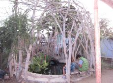Recycled ficus trees enclose a pond and seating area for contemplation.