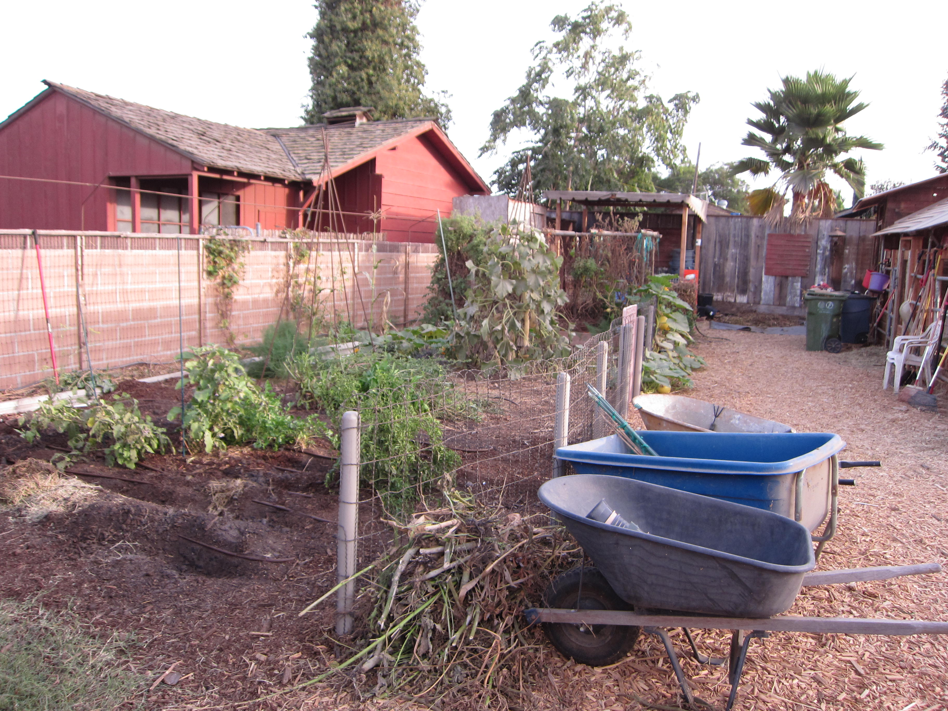 The vegetable garden winds down, but still has squash, basil and other crops.