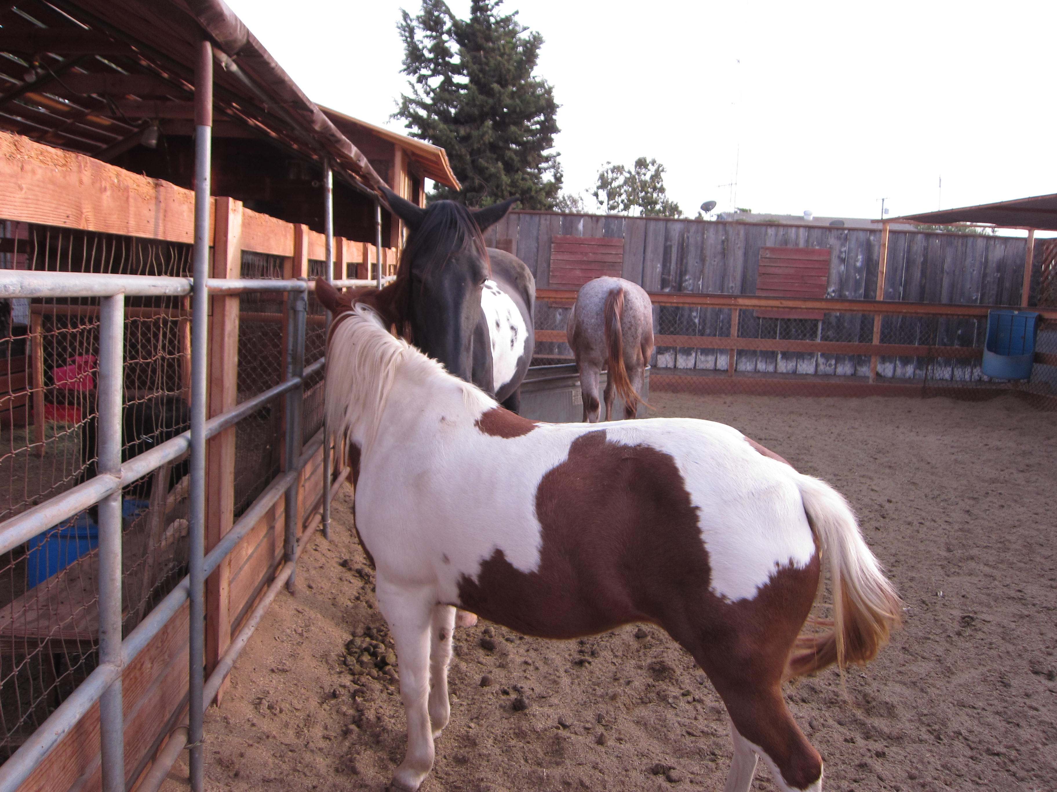 Horses are part of this microfarm.
