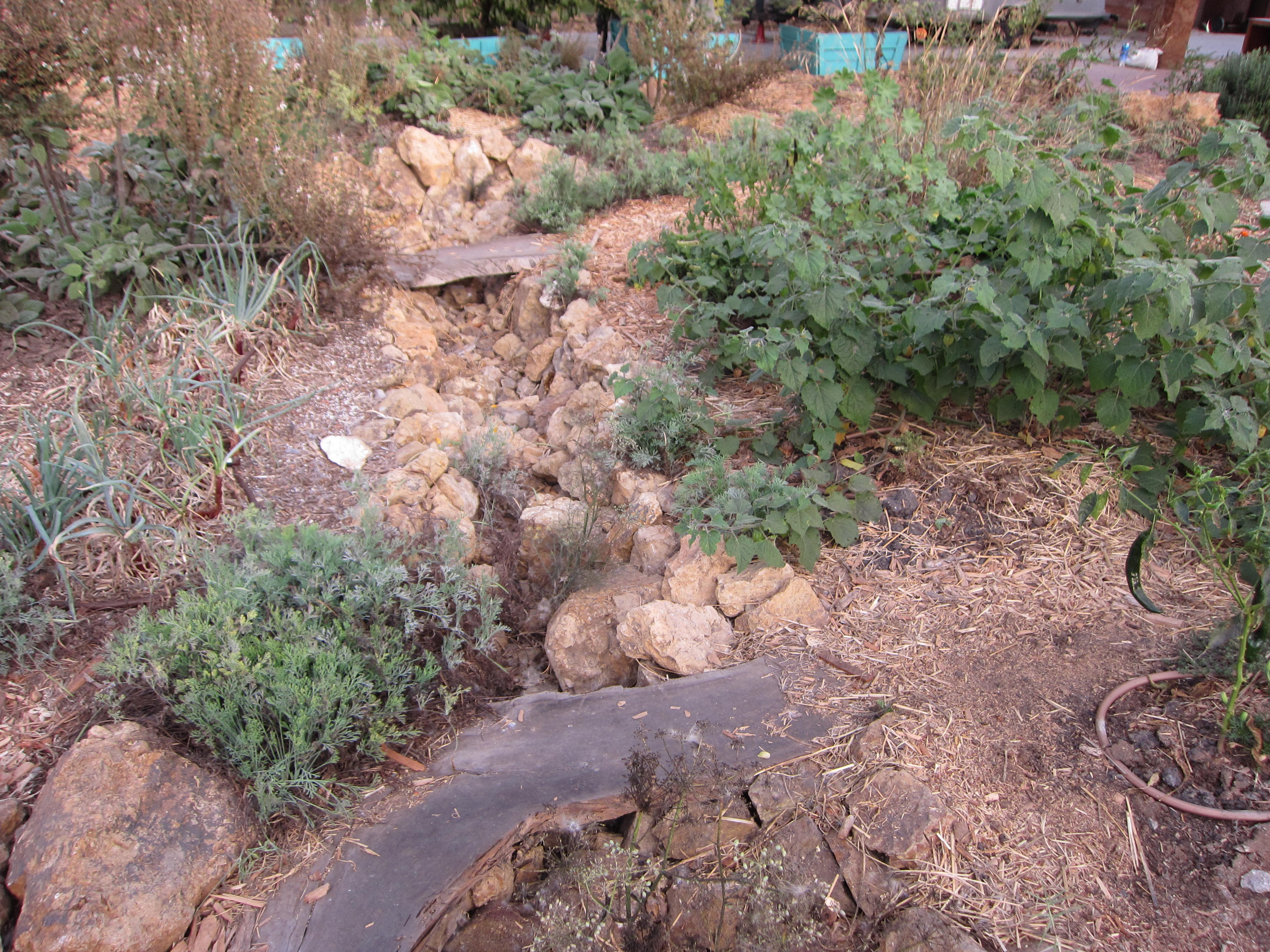 A bioswale captures water when it rains. The dry garden surrounding it soaks up water during the rainy season to survive the rest of the year.