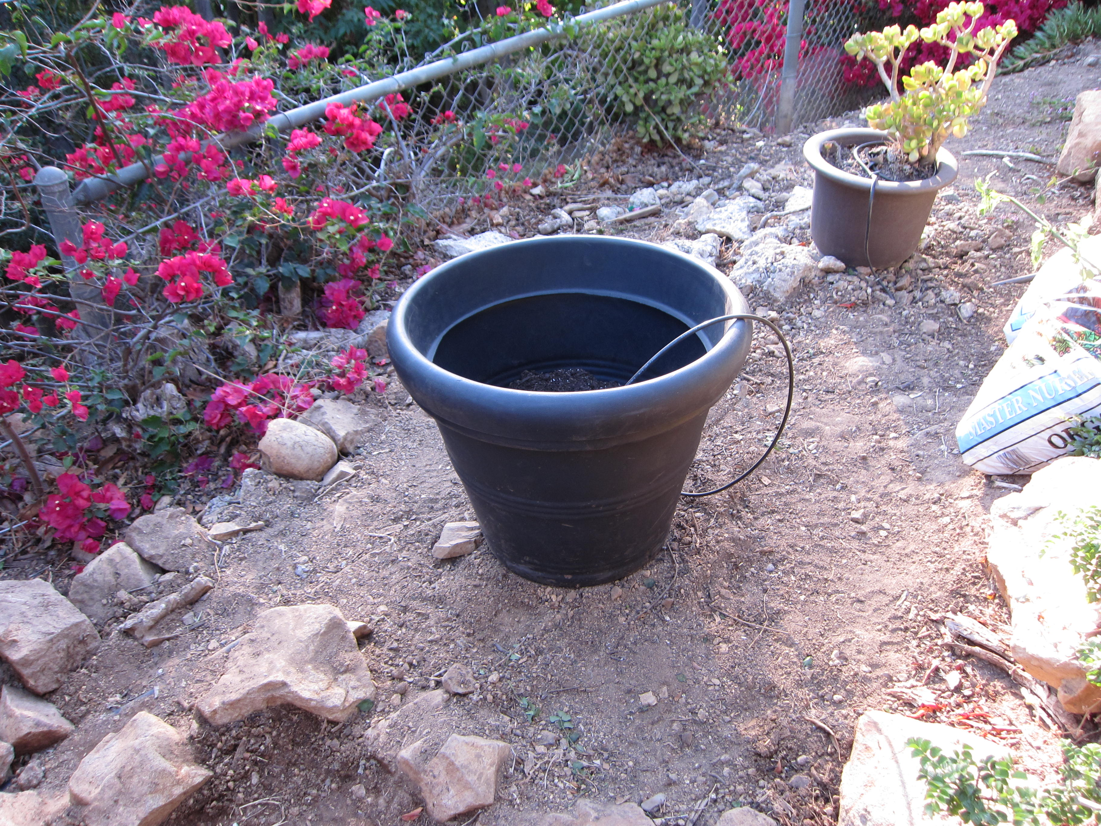 A large pot for potatoes is only filled a third of the way. We buried the seed potatoes and the homeowner will add soil as they grow, until the pot is full. Drip irrigation will keep soil moist as the potatoes grow.