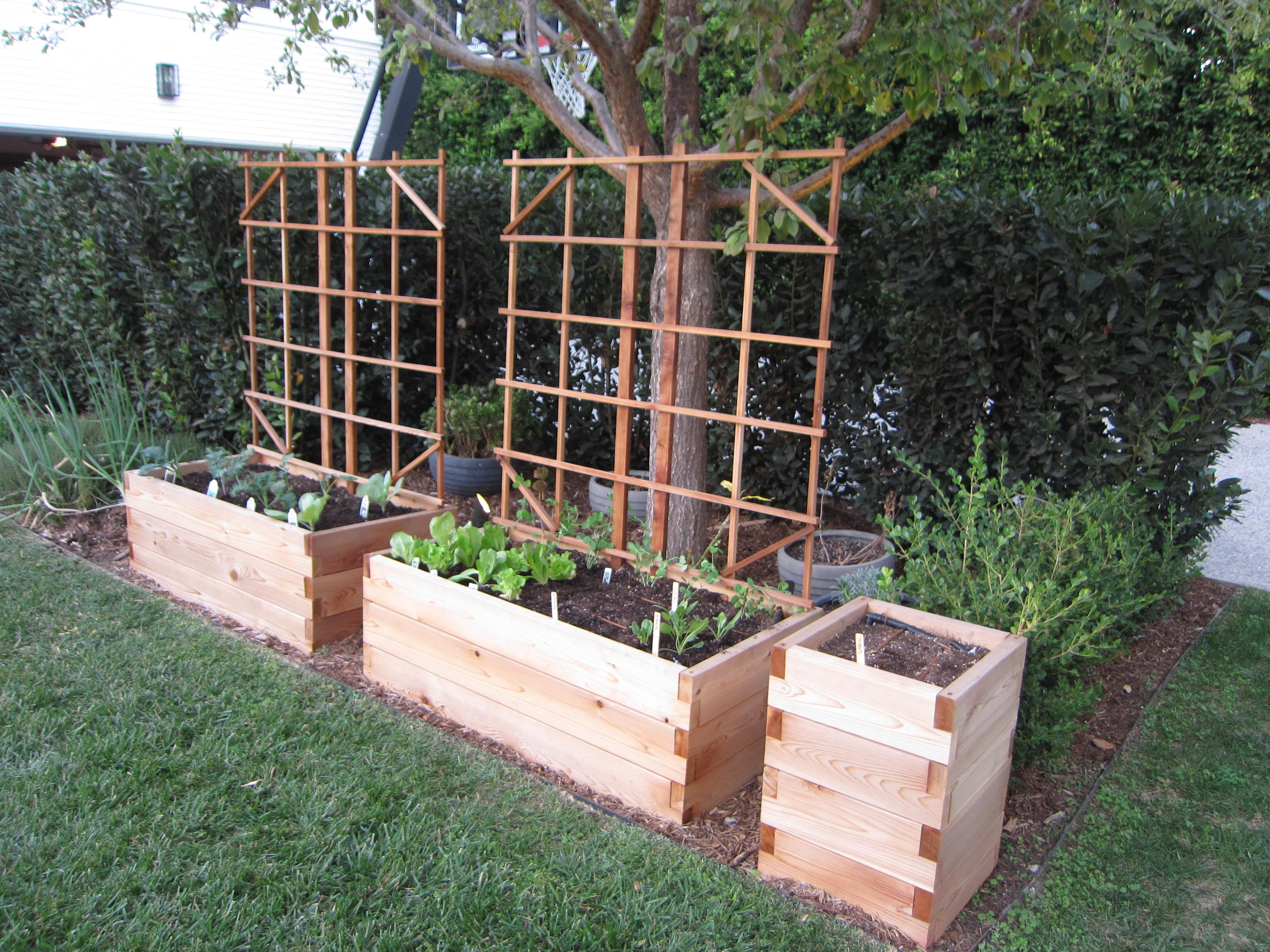 The finished product is a fun starter garden the whole family can enjoy.
