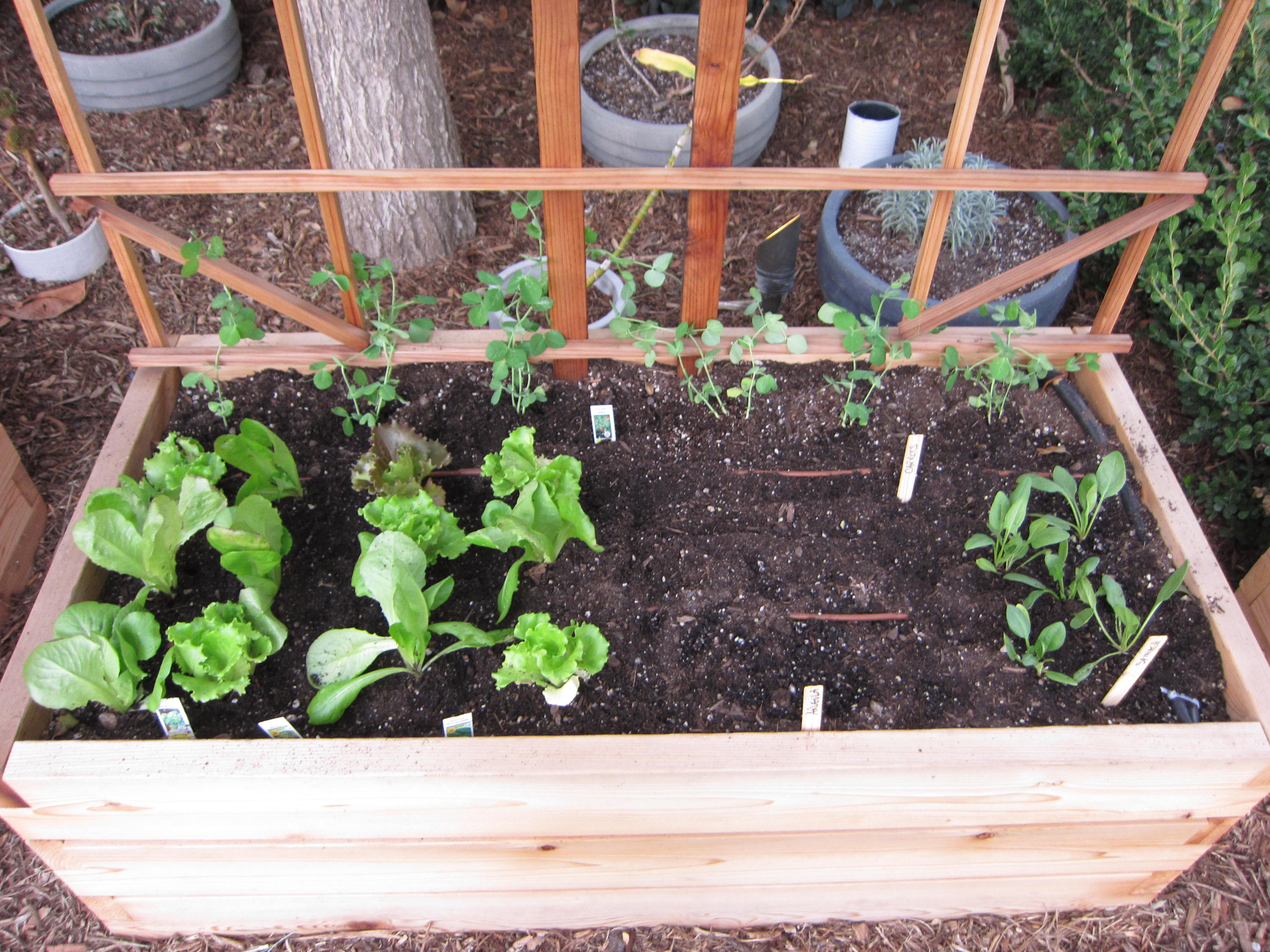 Lettuces, peas, spinach, carrots and arugula populate the next bed.
