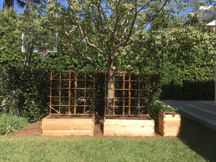 New raised beds are safe from invading roots of a nearby tree.