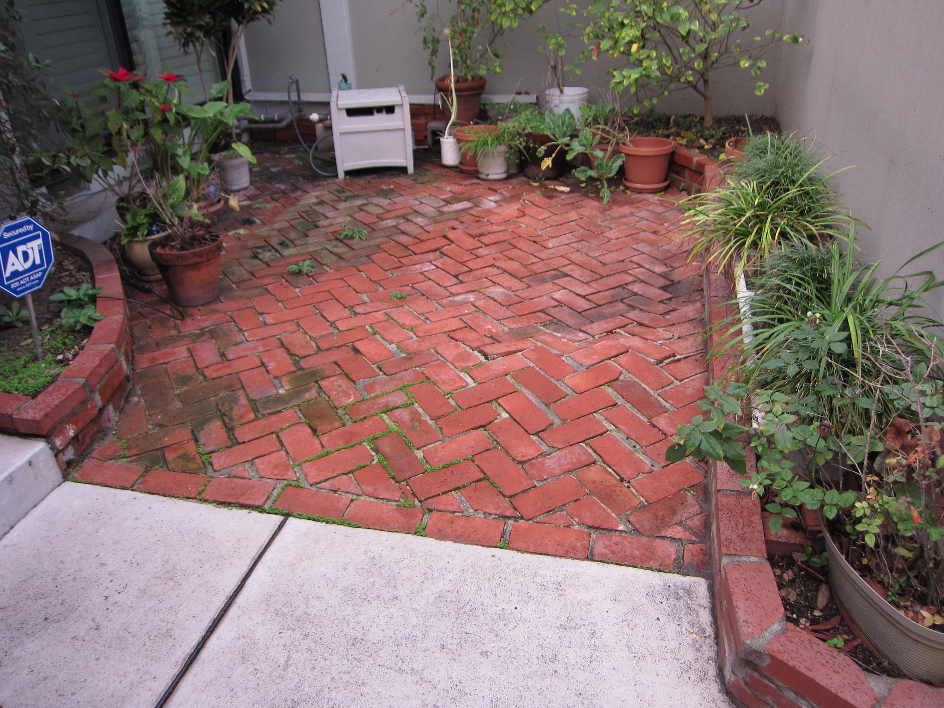 The client's brick patio undulated due to overgrown tree roots.
