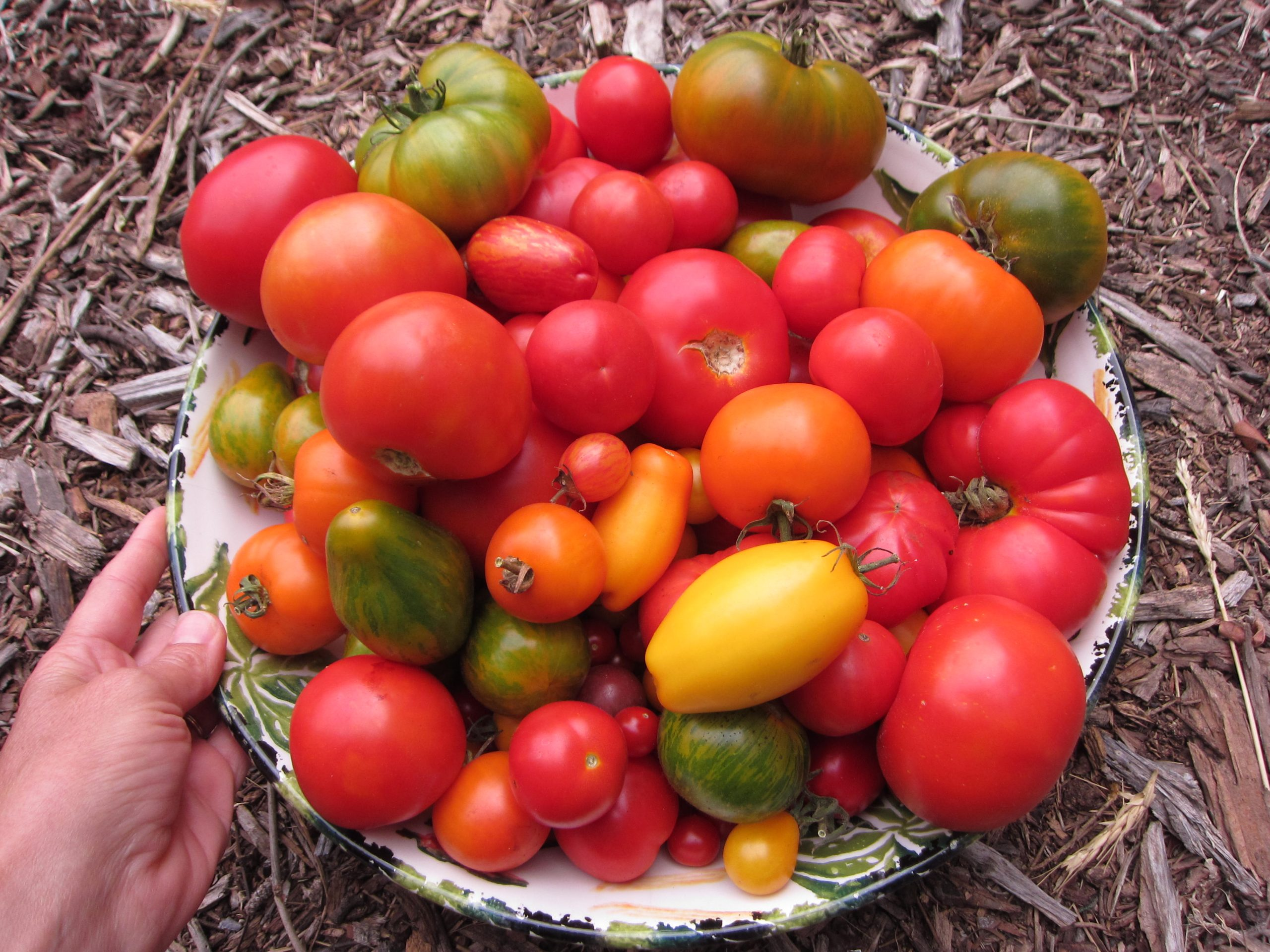 Read more about the article Things to Do with Tomatoes