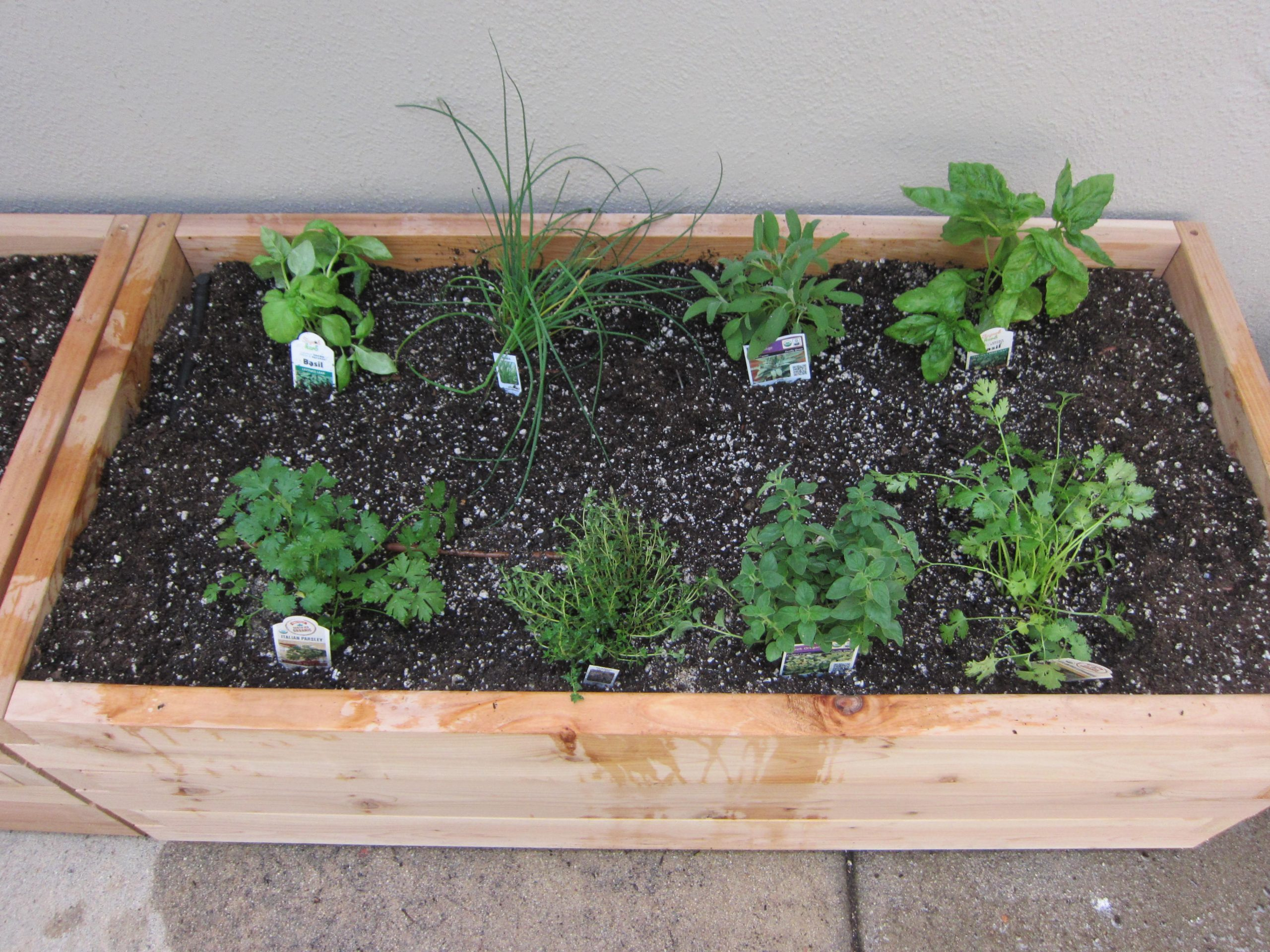 Read more about the article Design: Productive Patio Garden