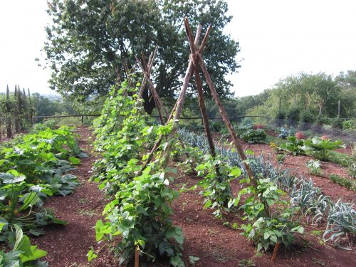 Read more about the article Field Trip: Thomas Jefferson's Monticello – Part 1 – The Garden