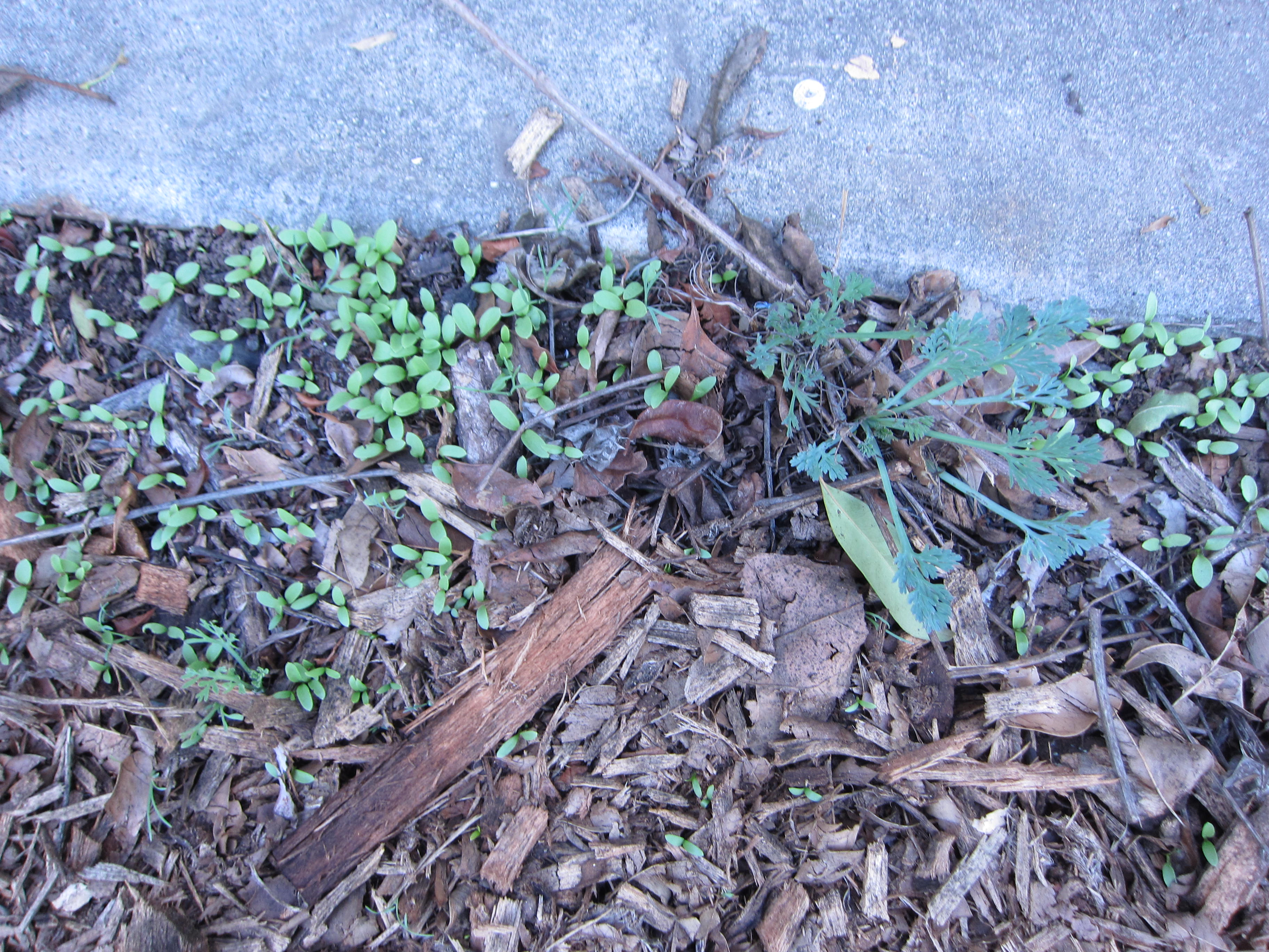 Wordless Wednesday flower sprouts