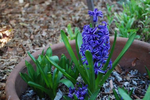 Read more about the article Wordless Wednesday: Happy Spring!