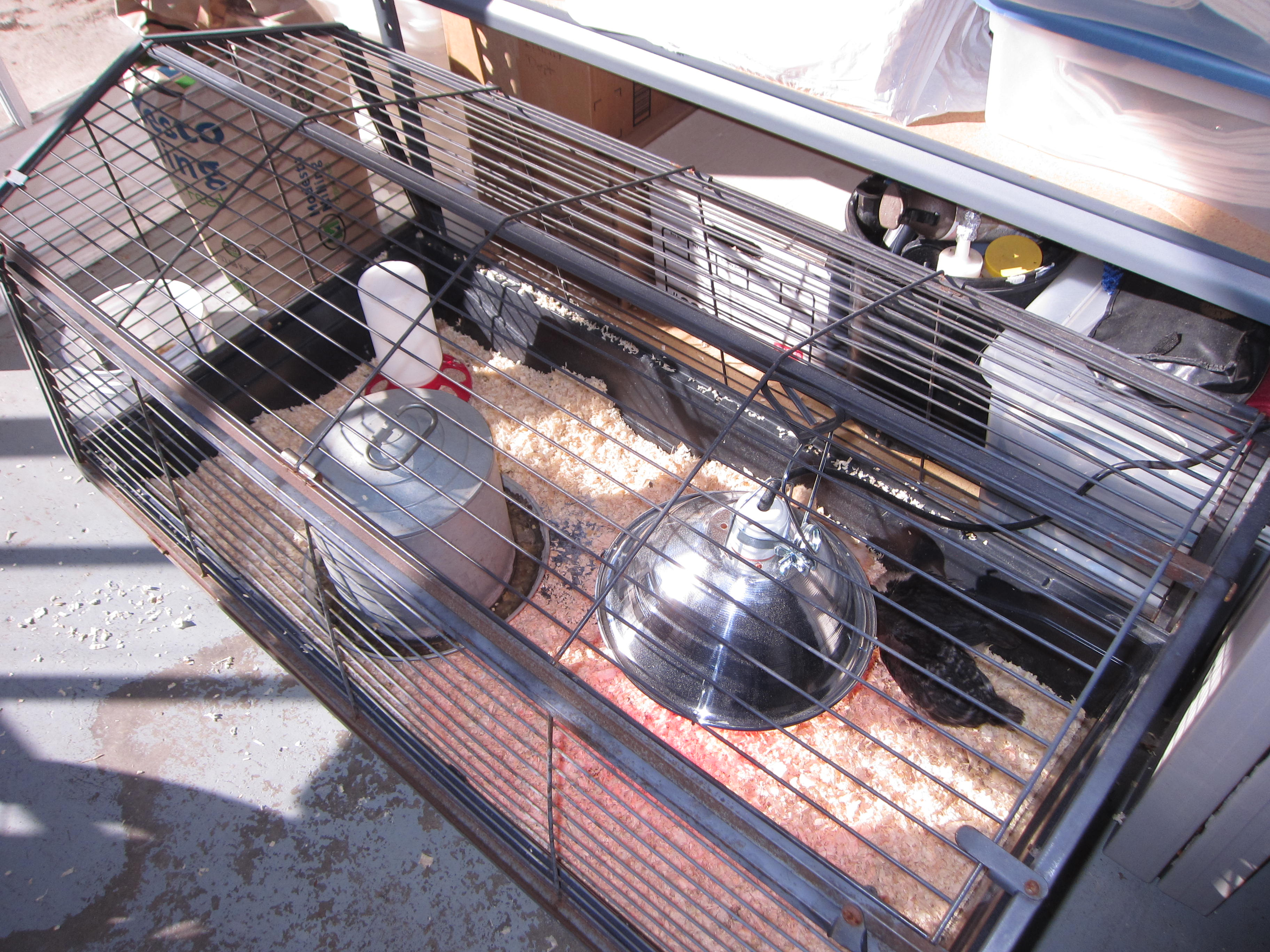 spring chickens cage