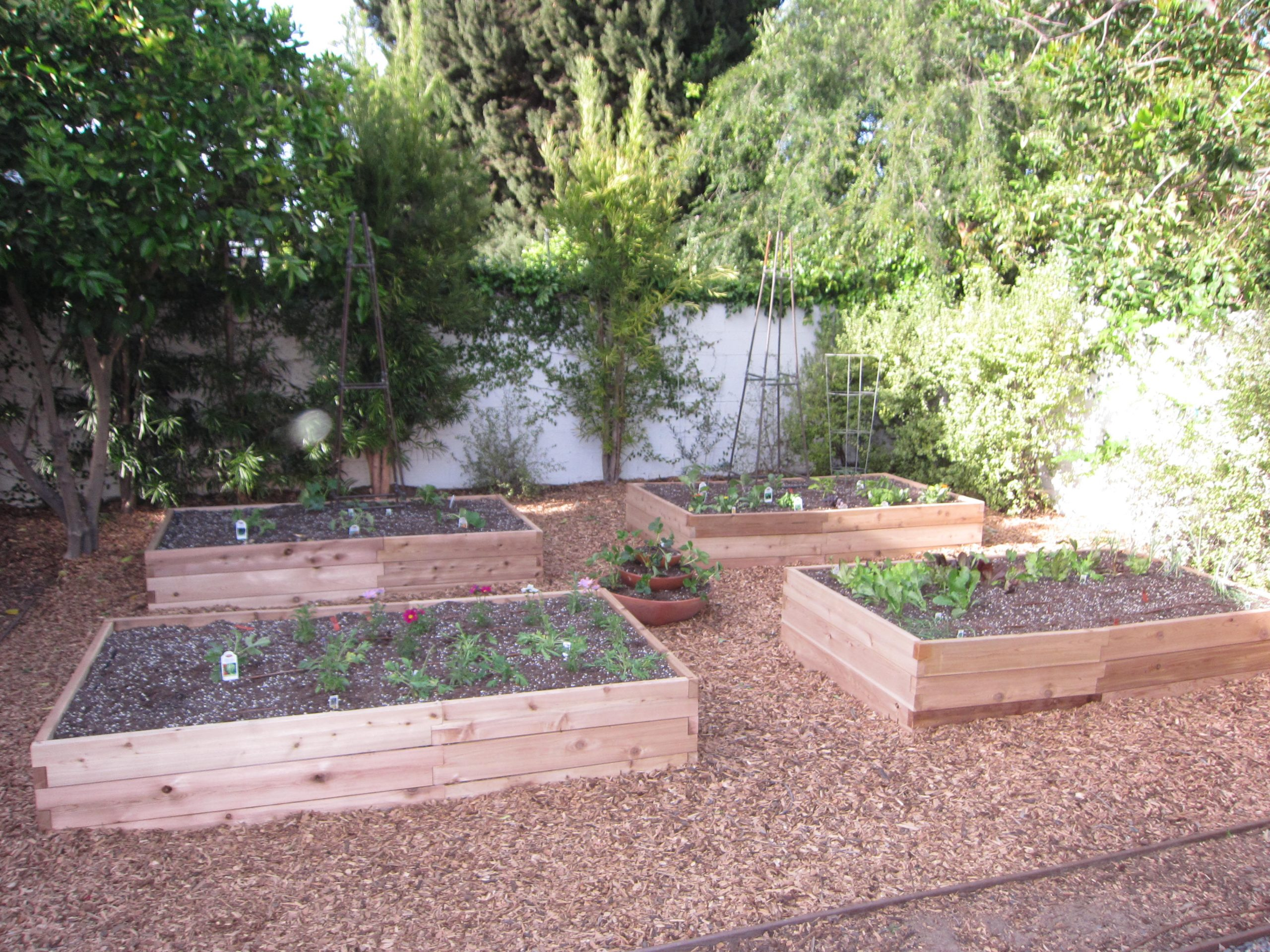 Read more about the article New Edible Space-Filler Garden