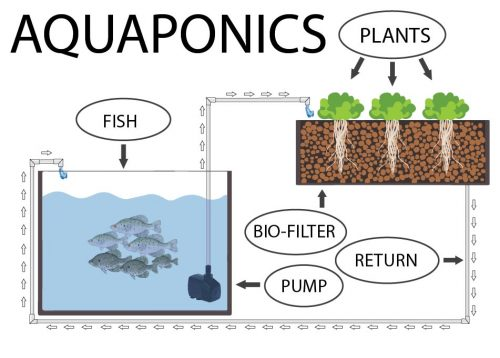 Read more about the article The Science of Aquaponics