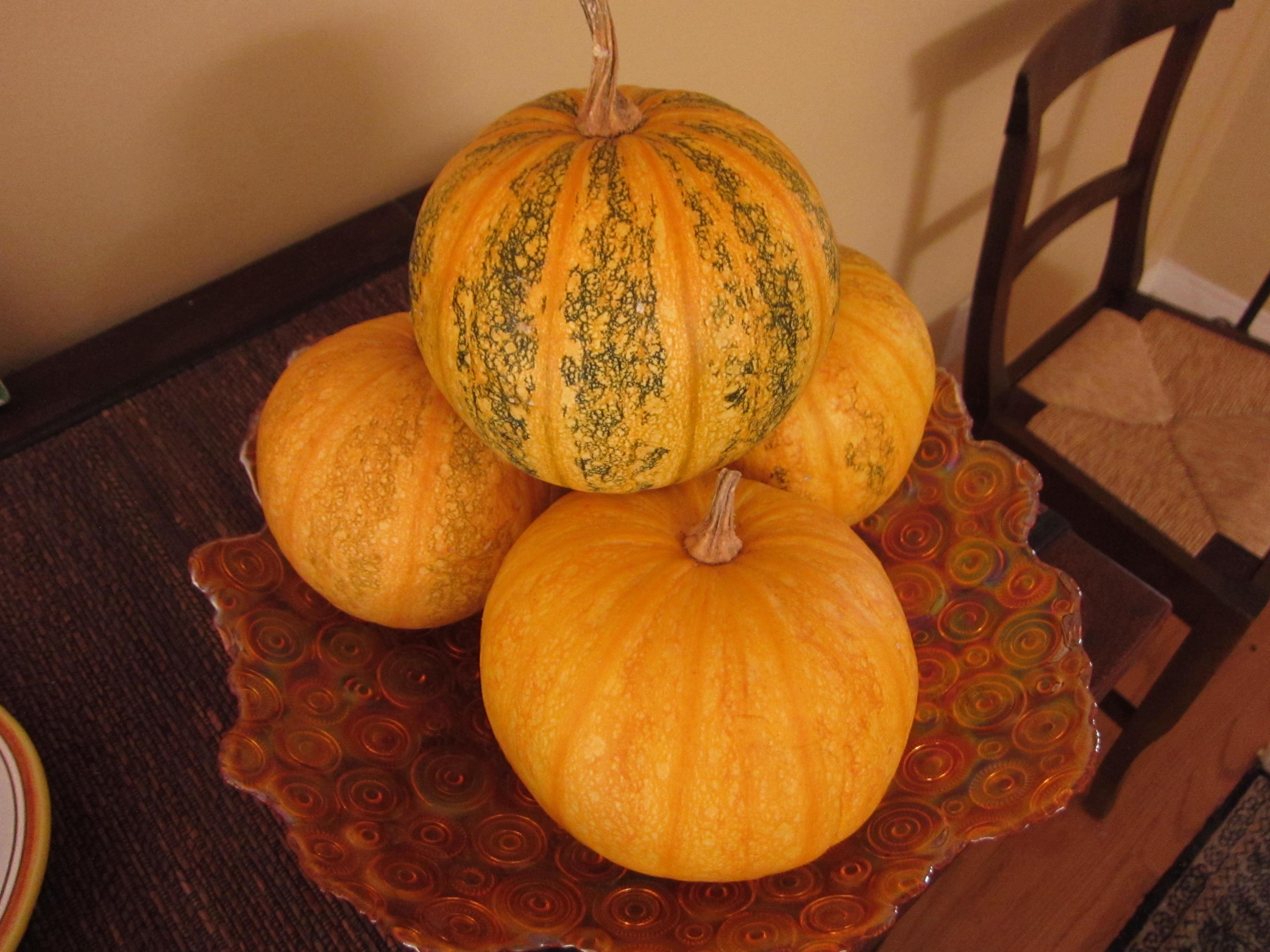 Wordless Wednesday Styrian Hulless Pumpkin