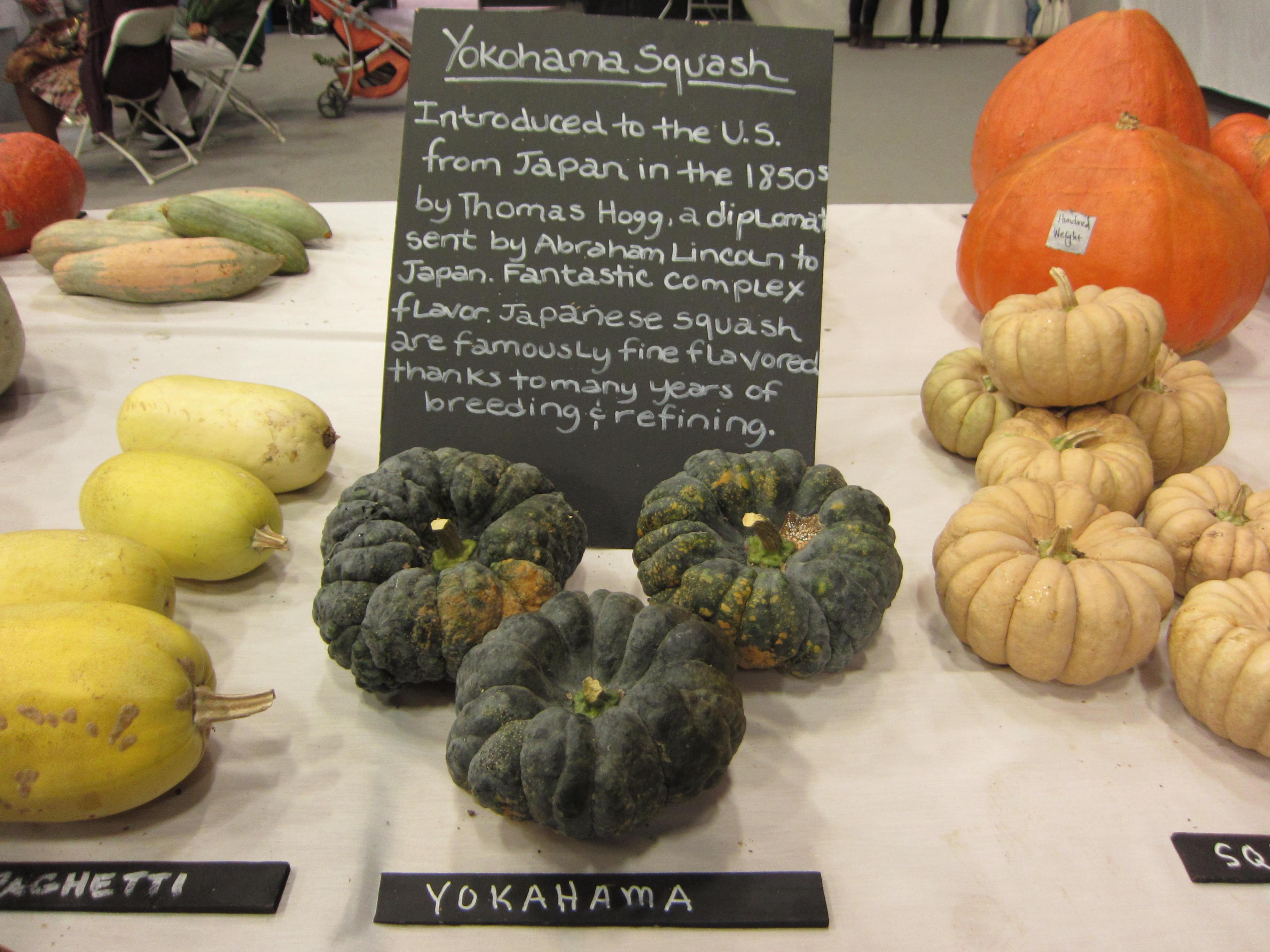 Heirloom Expo Yokohama squash