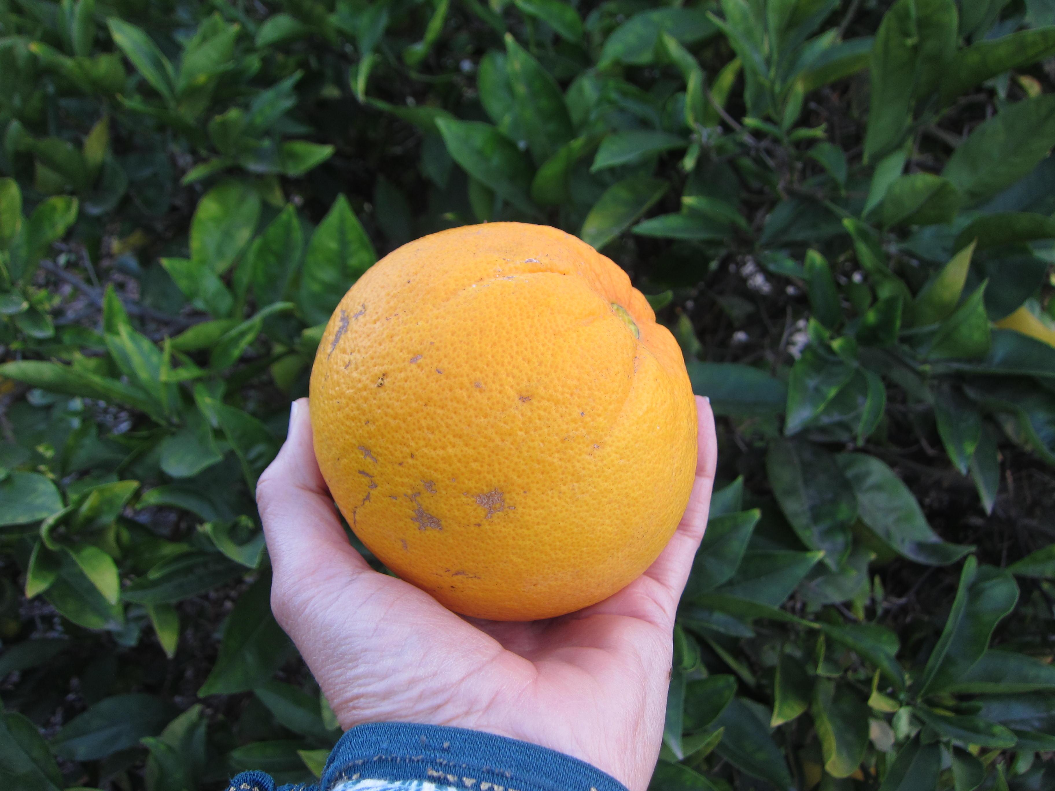Wordless Wednesday Orange
