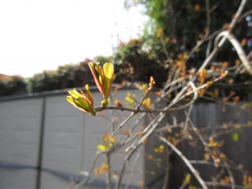 Read more about the article Wordless Wednesday: Signs of Spring