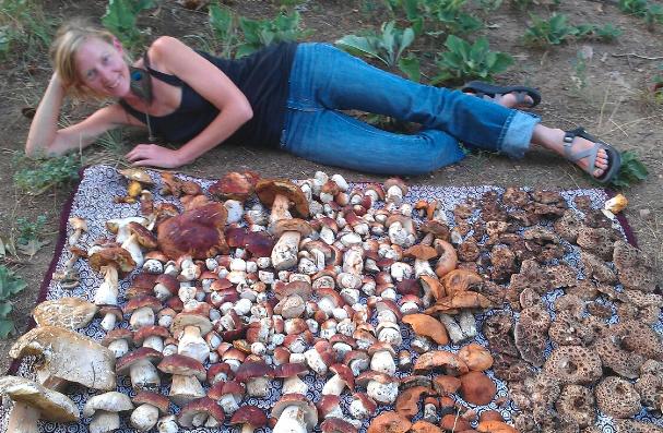 mushroom Erica Wohldmann