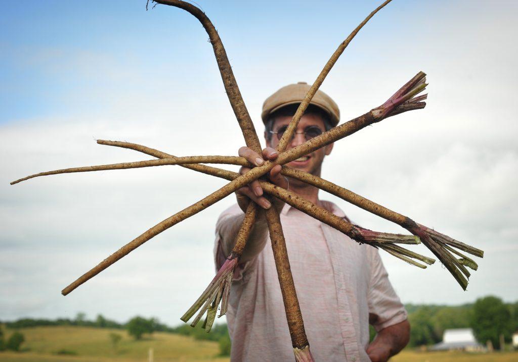 Burdock root Takinogawa Jere Gettle