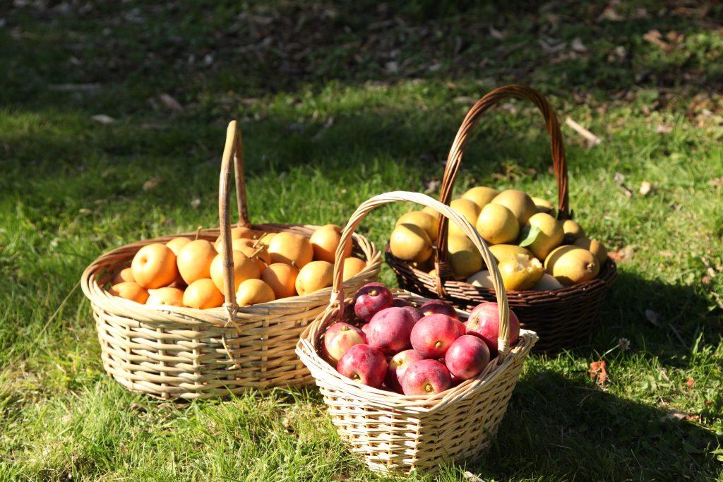 Fruit_baskets
