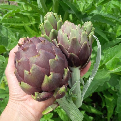 Read more about the article YouTube: Perennial Crops for Your Self-Reliance Garden