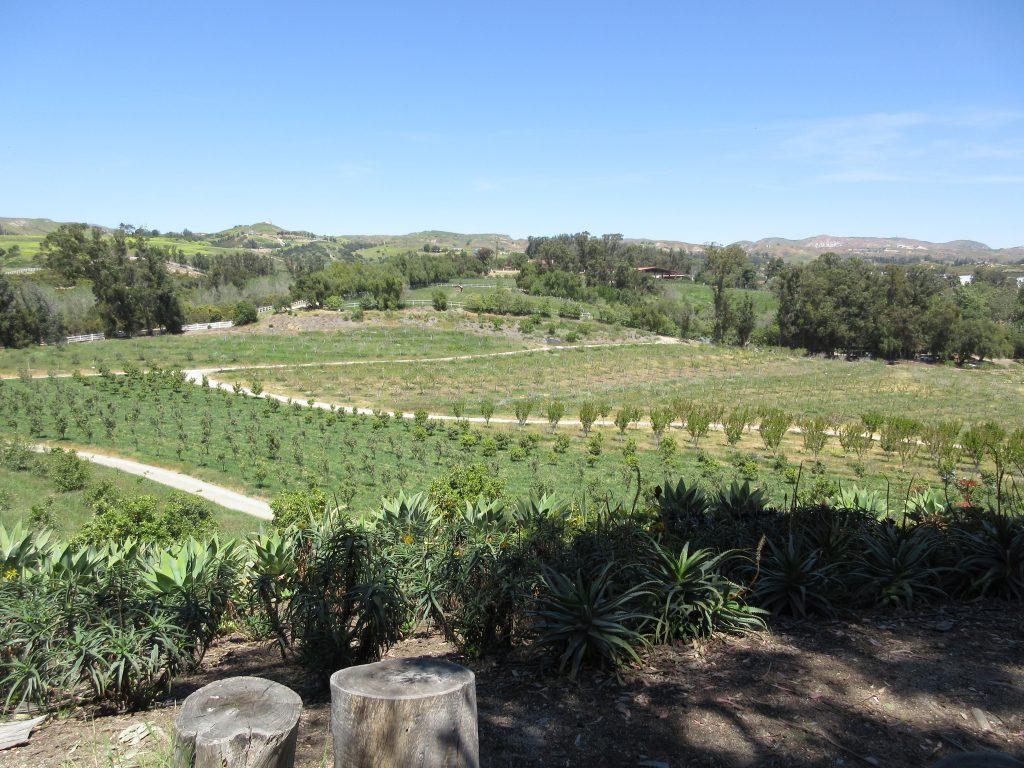 Apricot Lane Farms view