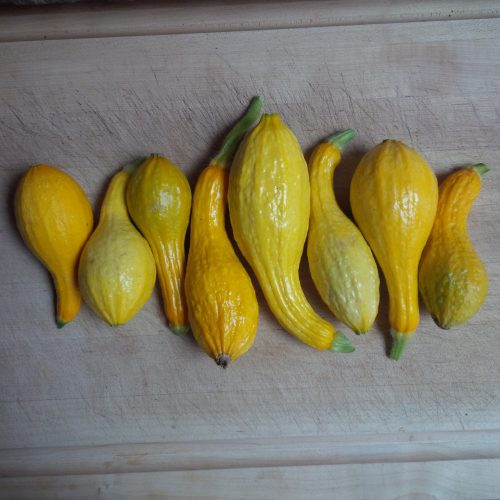 Read more about the article Recipe: Yellow Squash Soup