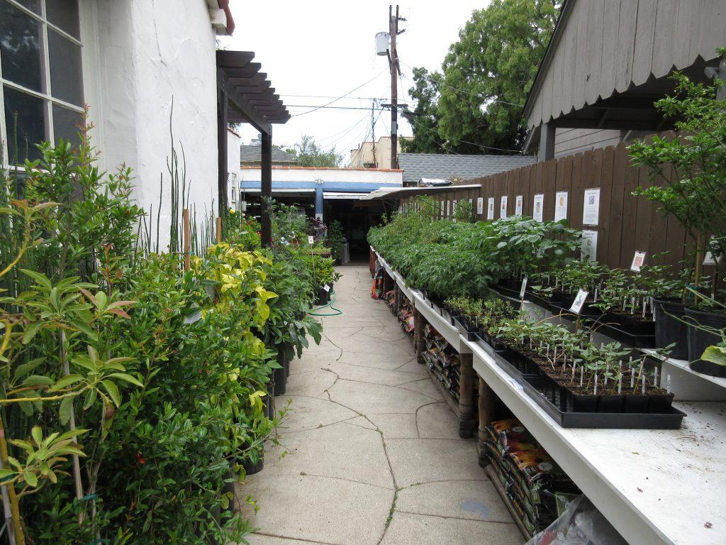 Two Dog Nursery plants