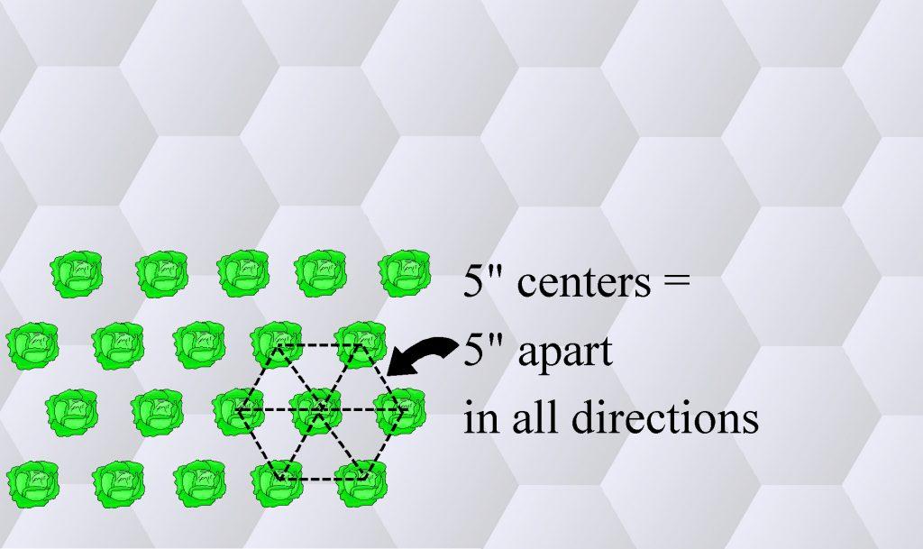hexagonal planting1