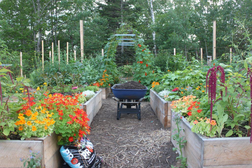 Niki Jabbour garden