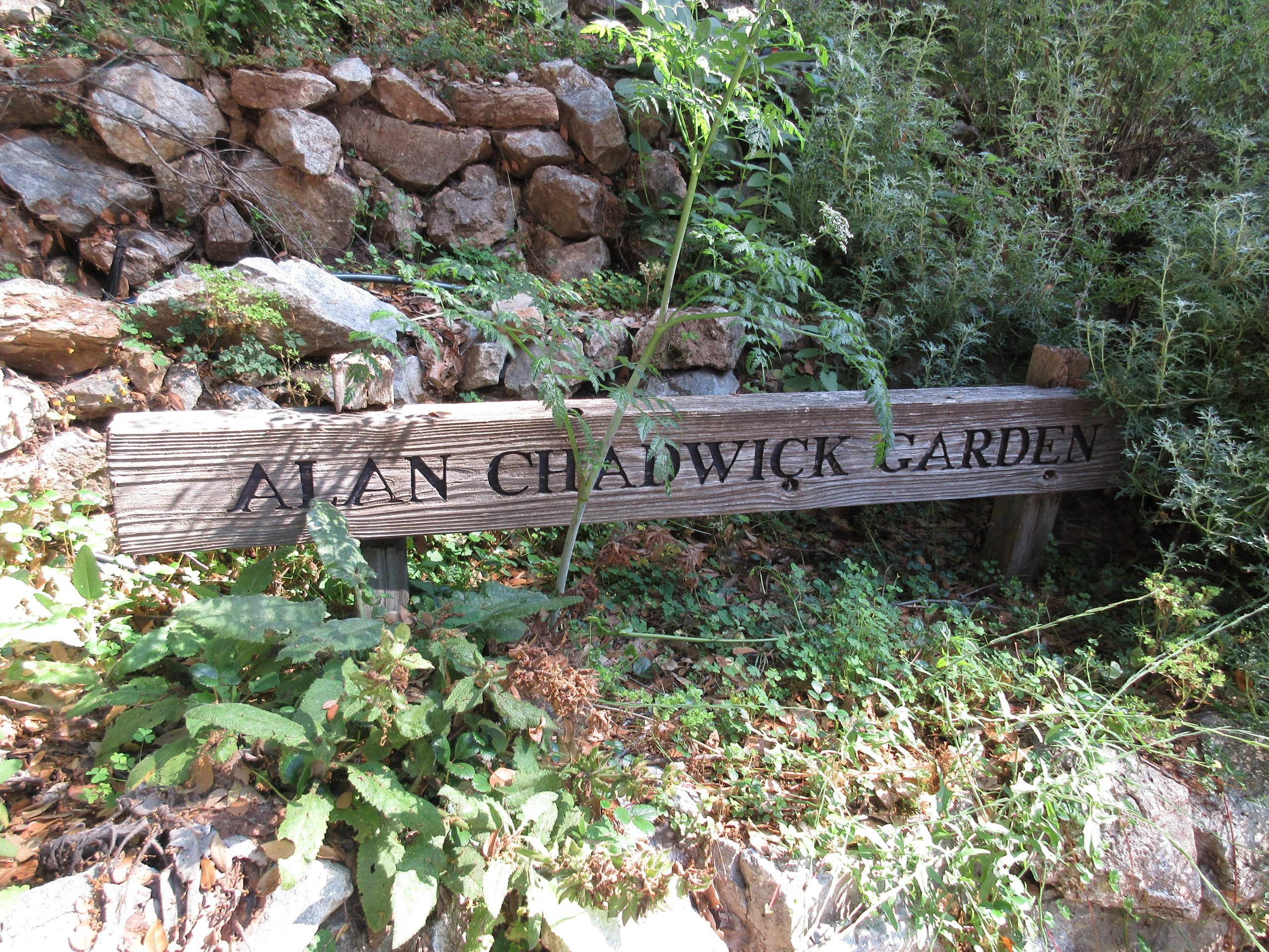 You are currently viewing Field Trip: Alan Chadwick Garden