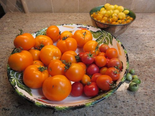Read more about the article Wordless Wednesday: Harvest Time
