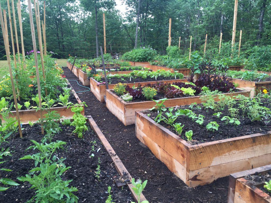 Niki Jabbour garden1