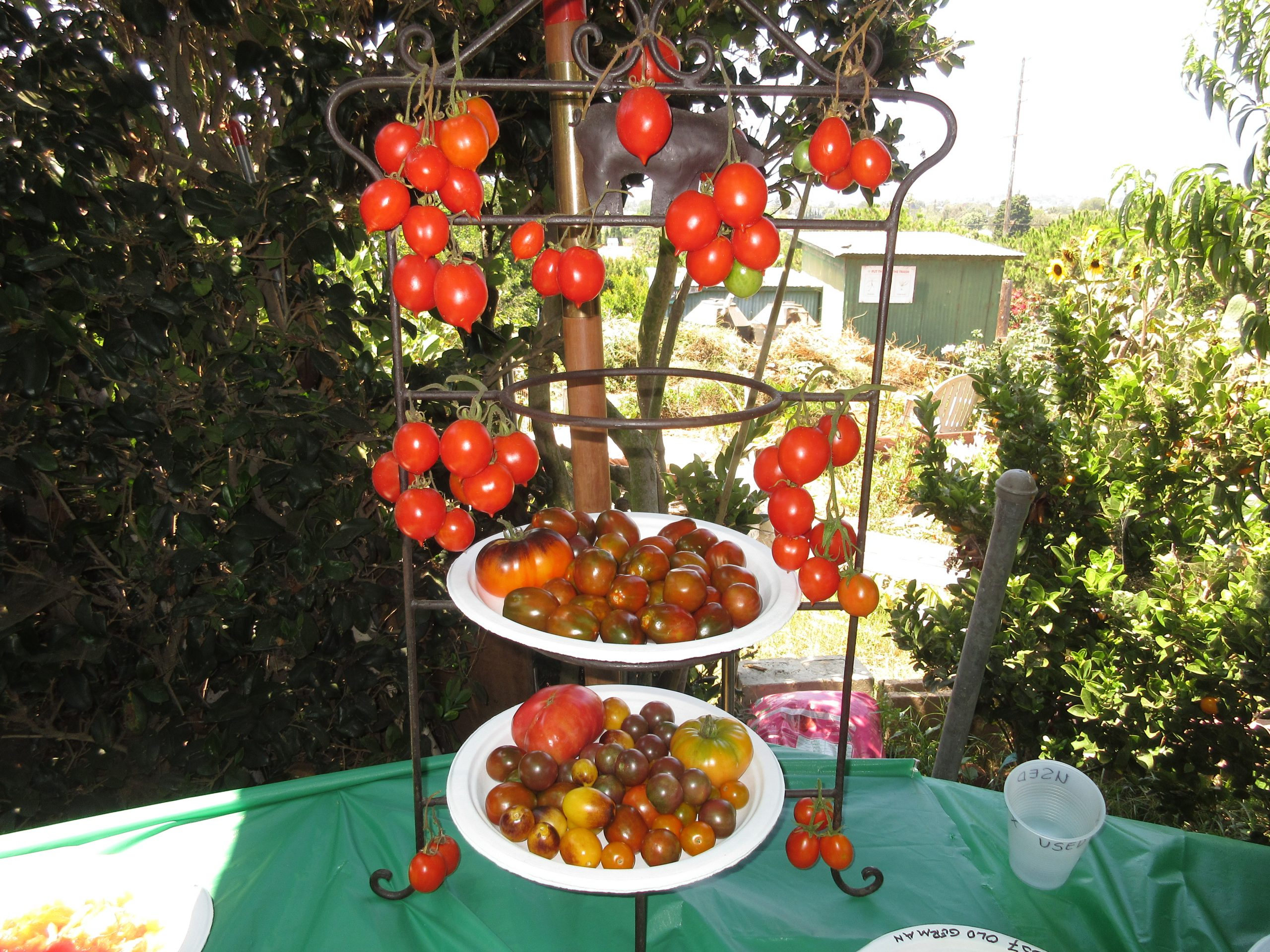 Read more about the article Throw a Tomato Tasting Party!