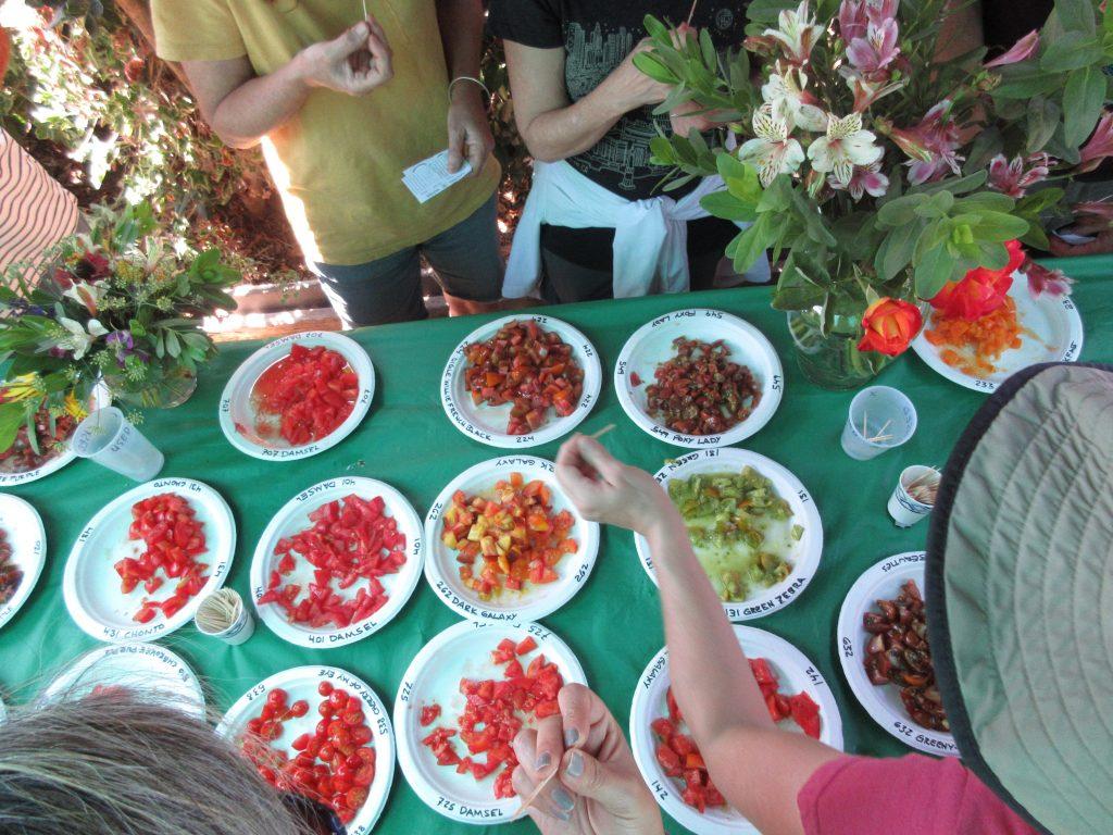 Tomato Tasting sampling