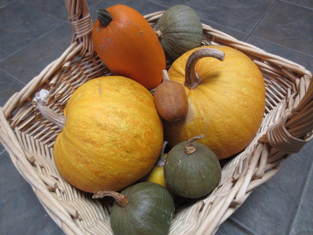 Wordless Wednesday Pumpkin harvest