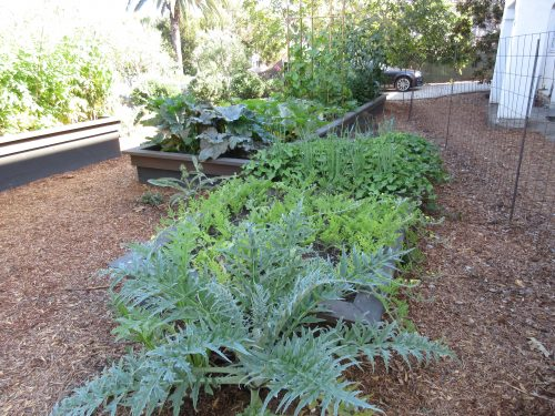 Read more about the article Design: A Two-Yard Partnership Garden