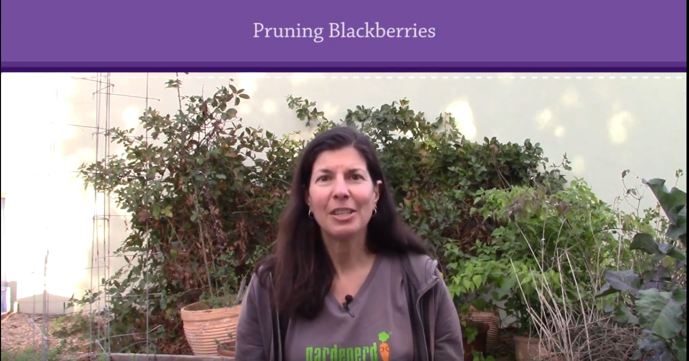 You are currently viewing YouTube: Pruning Blackberries in 3 Steps
