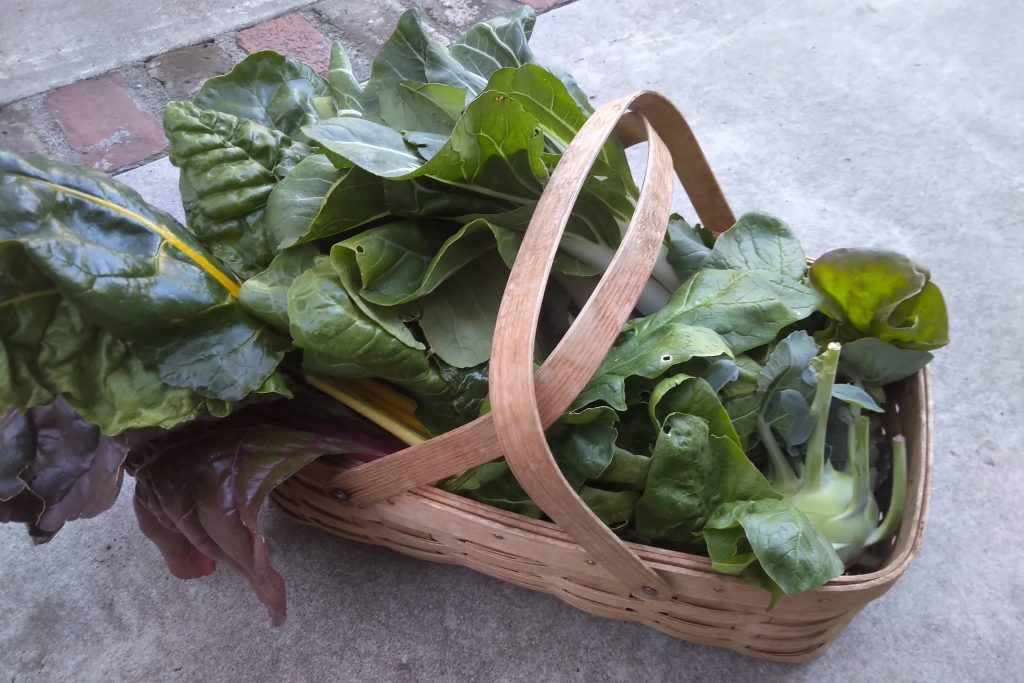Wordless Wednesday harvest