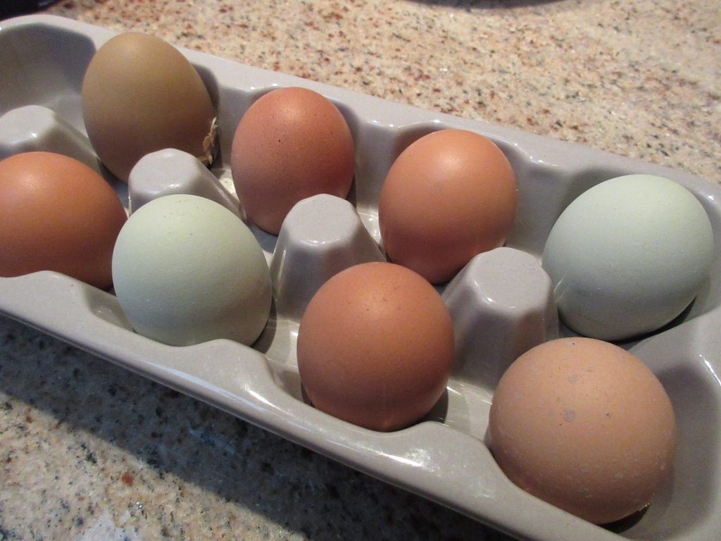 Wordless Wednesday Eggs