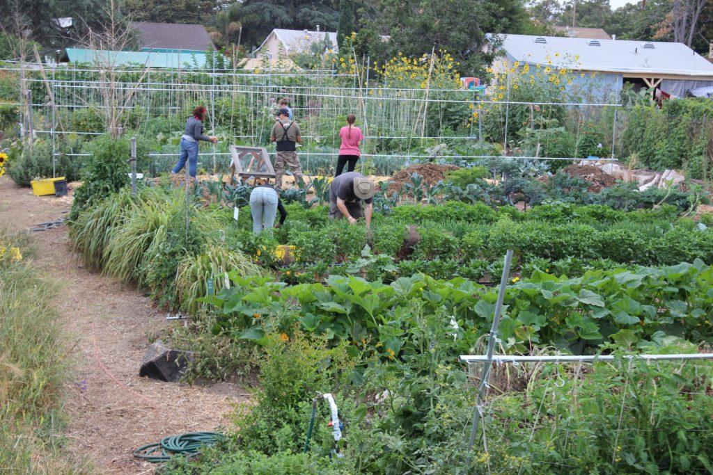 Sarvodaya Farms